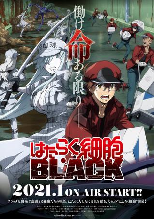 TVアニメ 『はたらく細胞BLACK』 第1弾PV解禁!