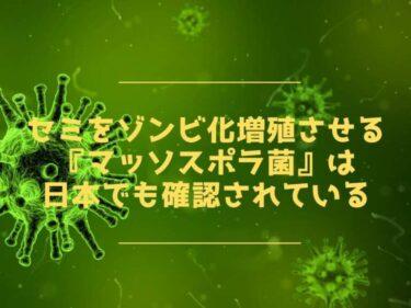 セミをゾンビ化増殖させる『マッソスポラ菌』は日本でも確認されている